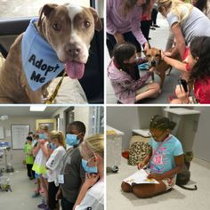 Field Trips, Humane Society, Travel With Kids, Animal Shelter, How To Find Out, Adoption, Pets, Unique, Books