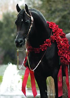 Horse with red rose wreath. Amazing beauty.