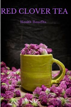 All the health benefits of drinking Red Clover Tea.  #teatime                                                                                                                                                                                 More