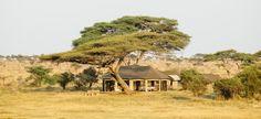 This exclusive Kenya Tanzania safari combines two of Africa's best wildlife destinations on one amazing itinerary: an unrivaled experience of Africa! Tanzania Safari, Serengeti National Park, African Safari, Kenya, Savannah Chat, Habitats, Parka, Trip Advisor, Wildlife