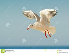 Seagull And Blue Sky Stock Photo - Image: 69368513