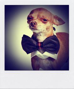 SOLOiO Bow Tie Winter Campaign. Dogs from www.javitocool.com  @soloiomoda