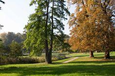 Bilder von einer Malreise auf der Insel Rügen | Sonniger Herbst im Park von Putbus (c) Frank Koebsch (4)