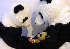 panda_man1.jpg