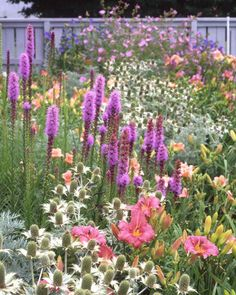 Learn successful strategies of master gardeners that you can put to use in your garden.