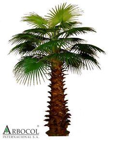 Palmera abanico grande 14331  3.50 cms alto x 2.10 cms ancho