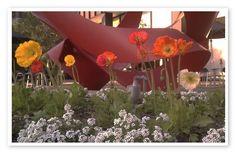 Ca. Poppies (via AMH)