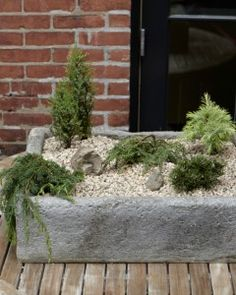 plant a tiny winter forest winter gardenoutdoor ideasoutdoor