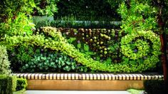 living vs artificial green walls: which is for you?