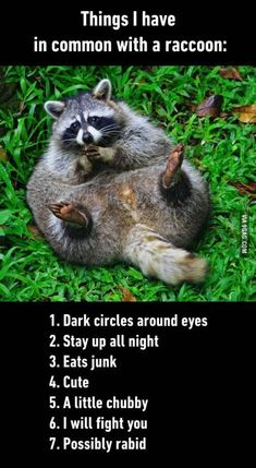 Funny Things In Common With A Raccoon