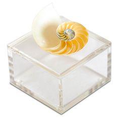 """4"""" Nautilus Shell Box, Natural $125.00"""