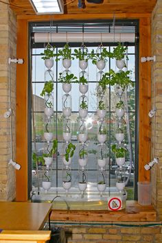 Are you in a small space and wondering where to grow? Vertically! Vertical window gardens, that is!