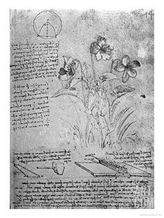 Studies of Violas Giclee Print by Leonardo da Vinci at Art.com