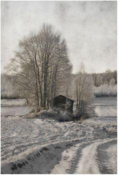 Kauhavan Oravan kylän vanhoja latomaisemia. Kuva: Paula Korkiamäki