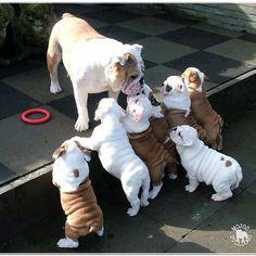 Alright puppies, listen up!