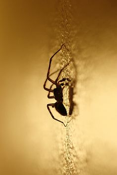 Types of Spiders – How are Spiders Classified and Grouped? URL:http://wolfspider.org/