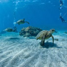 Turtle Town, Maui / mentioned at the end of Letters from Wishing Rock