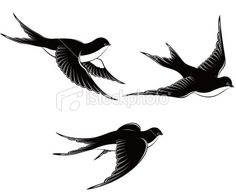 flying swallows Royalty Free Stock Vector Art Illustration