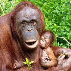 Imagen: Animales y sus madres (© REX FEATURES/Ray Wiltshire)