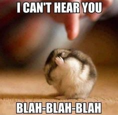 Funny Quotes: Top 30 Funny Animal Pictures and Jokes images . - BildersPin : Funny Quotes: Top 30 Funny Animal Pictures and Jokes images . Baby Animals Pictures, Cute Animal Pictures, Funny Pictures, Funny Images, Jokes Images, Funniest Pictures, Funny Animal Photos, Animal Pics, Cute Memes