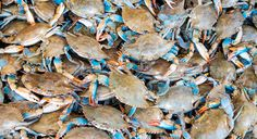 Want Sustainable Seafood? You Need This Cheat Sheet