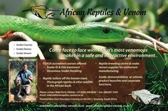 African Reptiles and Venom Snake Venom, Course Offering, Reptiles, South Africa, Business, Africa, Business Illustration