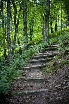 trail at wildcat mountain state park by mizzougrad001, via Flickr favorite-places-spaces