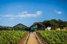 Silver Oak se torna a vinícola mais sustentável do mundo - SustentArqui