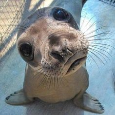 Cute Baby Seal | Love Cute Animals