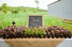 Plant Wedding Favors