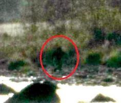 New Bigfoot Sighting In Northern California