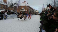 Reindeer racing in Tromso