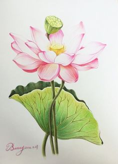Tattoo lotus rose water lilies 51 Ideas for 2019 Watercolor Lotus, Lotus Painting, Fabric Painting, Watercolor Flowers, Watercolor Paintings, Tattoo Watercolor, Lotus Flower Art, Lotus Art, Botanical Illustration