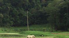 Famiglia Libardoni: Encontro Xerém, RJ, Brasil. Pássaro. IMG_8626. 43,4 ...