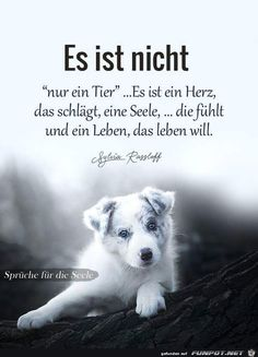 We are all connected . human - animal - nature - our 🌏 . True Words, True Friends, Best Friends, I Love Dogs, Cute Dogs, Animals And Pets, Cute Animals, We Are All Connected, Dog Quotes