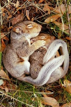 Enjoyed the pic ..My heart melted when i saw this... all-things-mother-earth