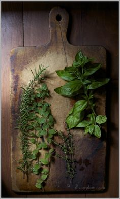 """Gardening with herbs, which is becoming increasingly popular, is indulged in by those who like subtlety in their plants in preference to brilliance."""" -   Helen Morgenthau Fox"""