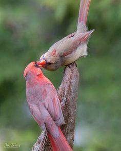 Mates for life beautiful spirit животные, птицы Pretty Birds, Love Birds, Beautiful Birds, Animals Beautiful, Beautiful Pictures, Bird Pictures, Animal Pictures, Animals And Pets, Cute Animals
