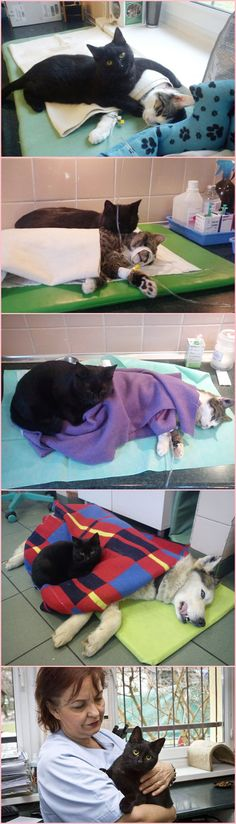 Love Fashion Share - Incredible Nurse Cat From Poland Looks After Other Animals At Animal Shelter