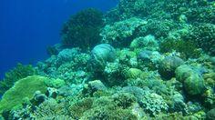 Underwater life❤️