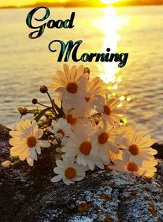 Good Morning Images With Nature – Good Morning Images – Good Morning Nature Wallpaper – Nature Good Morning Pics – Latest Good Morning Images – Good Morning Pic Good Morning Friends Images, Good Morning For Him, Latest Good Morning Images, Good Morning Nature, Good Morning Beautiful People, Good Morning Flowers, Morning Pictures, Morning Pics, Morning Cat