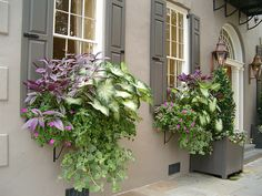 Charleston window box. Love the shutters and flowers.