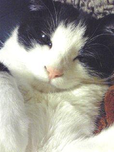2008/09/15 ものすごく眠い顔