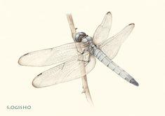 シオカラトンボ Pictures Of Insects, Pictures To Draw, Seiko, Colored Pencils, Colouring Pencils, Crayons, Paint Colors