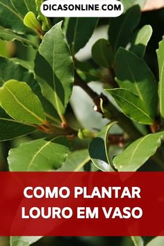 Tropical Garden, Kefir, Adora, Detox, Plant Leaves, Herbs, Vegetables, Diy, Food