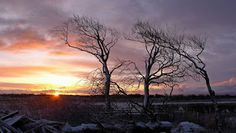 the-serentity-of-the-solway-firth #solway #firth #dumfries #galloway #sunset #trees
