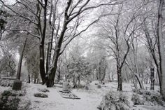 A forest cemetery in the winter, covered in snow Stock Photo