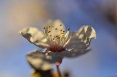 _DSC0185 (2) FLYING LIKE A BUTTERFLY ... by ipon1, via Flickr