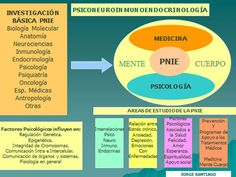 psiconeuroinmunología sistema endocrino sistema inmunologico nervioso salud