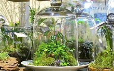 Some do it in glass containers (terrariums) – CONTAINER GARDENING